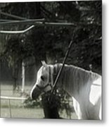In The Captivity Metal Print