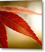 Japanese Maple Leaf Metal Print