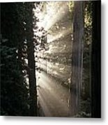 Jedediah Smith Redwoods State Park Redwoods National Park Del No Metal Print
