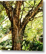 Kingdom Of The Trees. Peradeniya Botanical Garden. Sri Lanka Metal Print