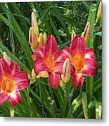 Three Lilies In A Row Metal Print