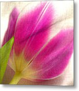 Linen Tulip Metal Print by Bobbi Feasel