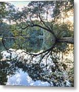 Live Oak Reflections Metal Print