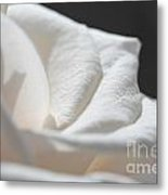Long-stemmed White Rose Metal Print