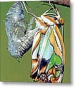 Malachite Butterfly Metamorphosis Metal Print