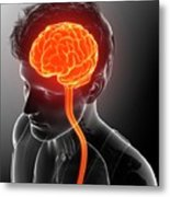 Male Brain And Spinal Cord Metal Print
