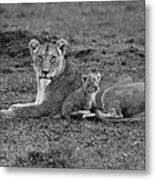 Mama's Little Baby Metal Print