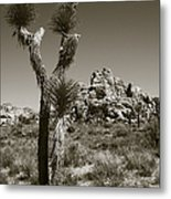 Joshua Tree National Park Landscape No 3 In Sepia Metal Print