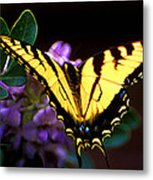 Monarch On Mountain Laurel Metal Print