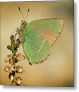 Nature And Places Of Spain Metal Print