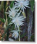 Night Blooming Cactus Metal Print