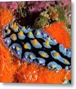 Nudibranch Metal Print