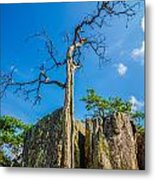 Old And Ancient Dry Tree On Top Of Mountain Metal Print