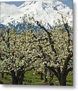 Orchard And Mount Hood, Oregon Metal Print