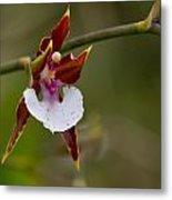 Orchid From Finca Dracula Metal Print