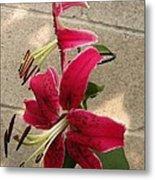 Orienpet Lily Named Scarlet Delight Metal Print