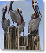 Pelicans Five Metal Print