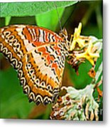 Plain Tiger Butterfly Metal Print