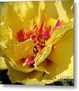 Portulaca Named Happy Hour Banana Metal Print