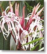 Queen Emma Crinum Lilies Metal Print