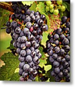 Red Grapes Metal Print by Elena Elisseeva