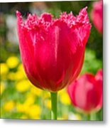 Red Tulips On The Green Background Metal Print