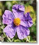 Rockrose Flower Metal Print
