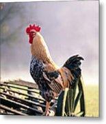 Rooster Metal Print by Hans Reinhard