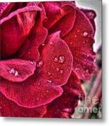 Red Rose And Summer Rain Metal Print