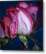 Rose Still Life Metal Print