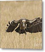 Ruppells Vulture Metal Print