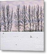 Rural Winter Landscape Metal Print by Elena Elisseeva