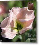 Single Peach Stocks From The Vintage Mix Metal Print