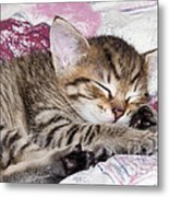 Sleeping Kitten Metal Print