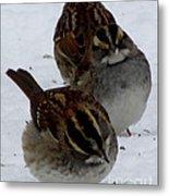 3 Sparrows Metal Print