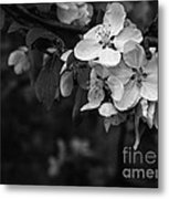 Spring Blossoms Metal Print