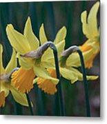 Spring Sunshine Metal Print