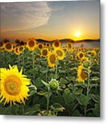 Summer Morning Metal Print