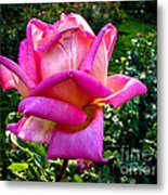The Pink One Metal Print