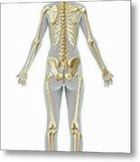 The Skeleton Female Metal Print