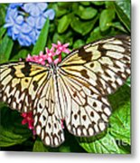 Tree Nymph Butterfly Metal Print