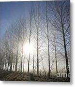 Trees On A Foggy Field Metal Print