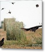 Turkey Vultures Metal Print
