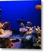 Underwater Scene Metal Print