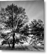 Usa, Tennessee, Great Smoky Mountains Metal Print
