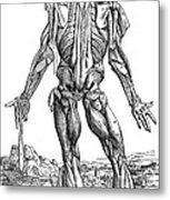 Vesalius: Muscles, 1543 Metal Print
