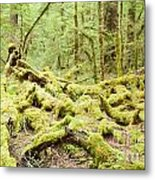 Virgin Rainforest Wilderness Of Fiordland Np Nz Metal Print