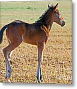 Wild Horse Foal Metal Print