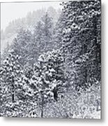 Winter In Pike National Forest Metal Print