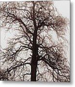 Winter Tree In Fog Metal Print